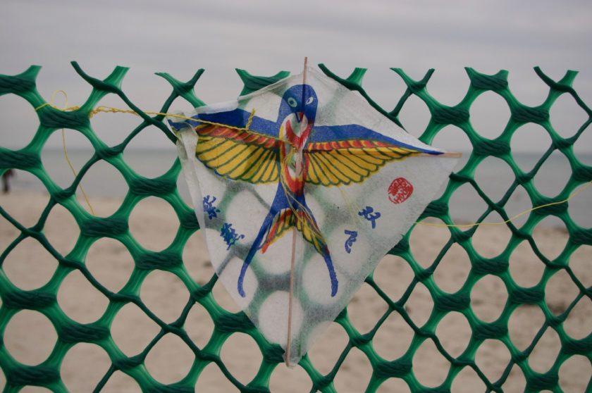 Kleiner Drache im Zaun am Ostseestrand, fotografiert von M i MA
