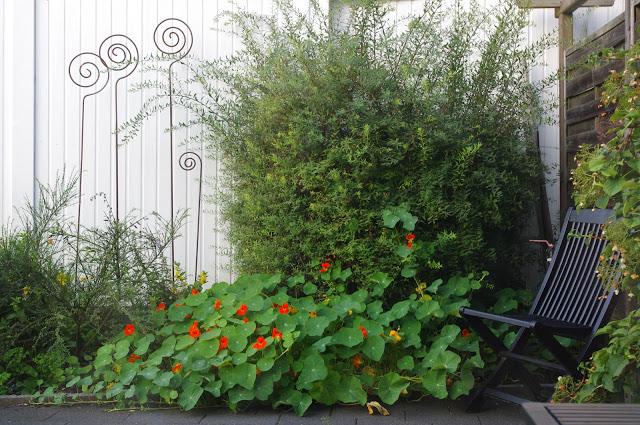 Garten, Sommer, Planschbecken, Kinderspaß