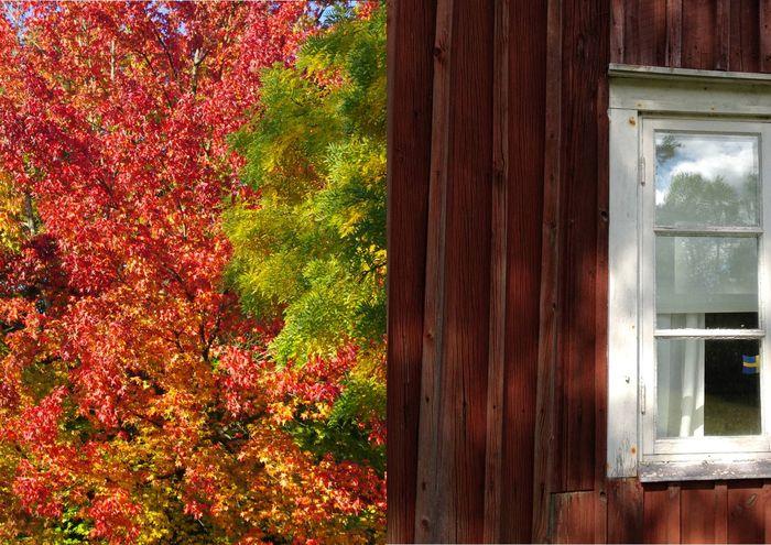 Herbst, Herbstfarben, Herbstlaub