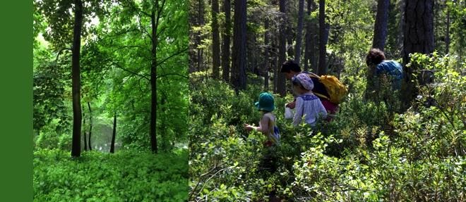 Grün, Schweden, Wald, Blaubeersammeln, Astrid Lindgren, Bullerbü