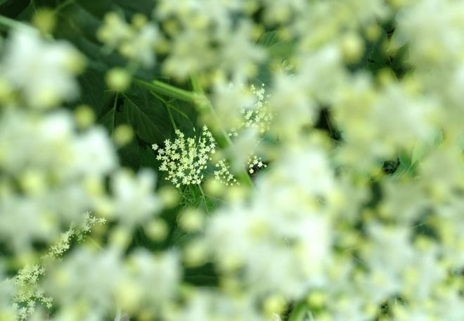 Hefezopf, Holunderbluetensirup, Rezept