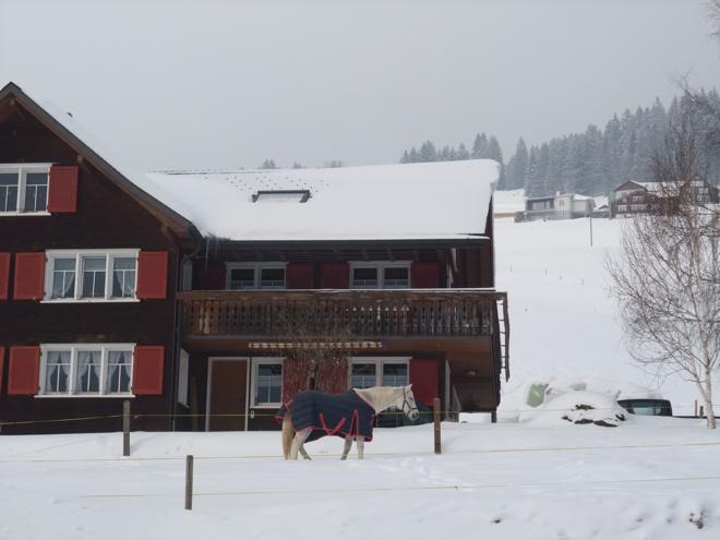 Frohe Weihnachten einen guten Rutsch M i MA Winter in den Bergen Pferd