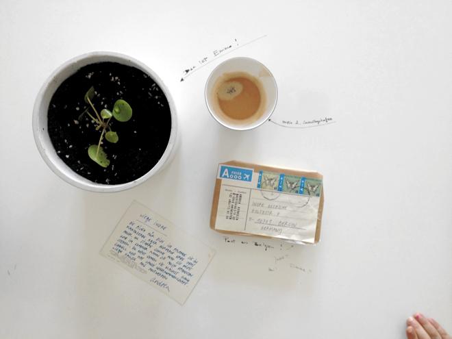 Ufopflanze, Urban Jungle Bloggers, Post, Antwerpen, Tales of Nightingale Blog, M i MA