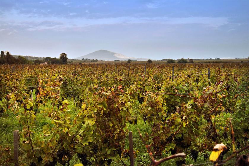 Das Weingut Hummel in Ungarn