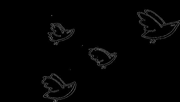 zeichnung-voegel Julia Spaeth