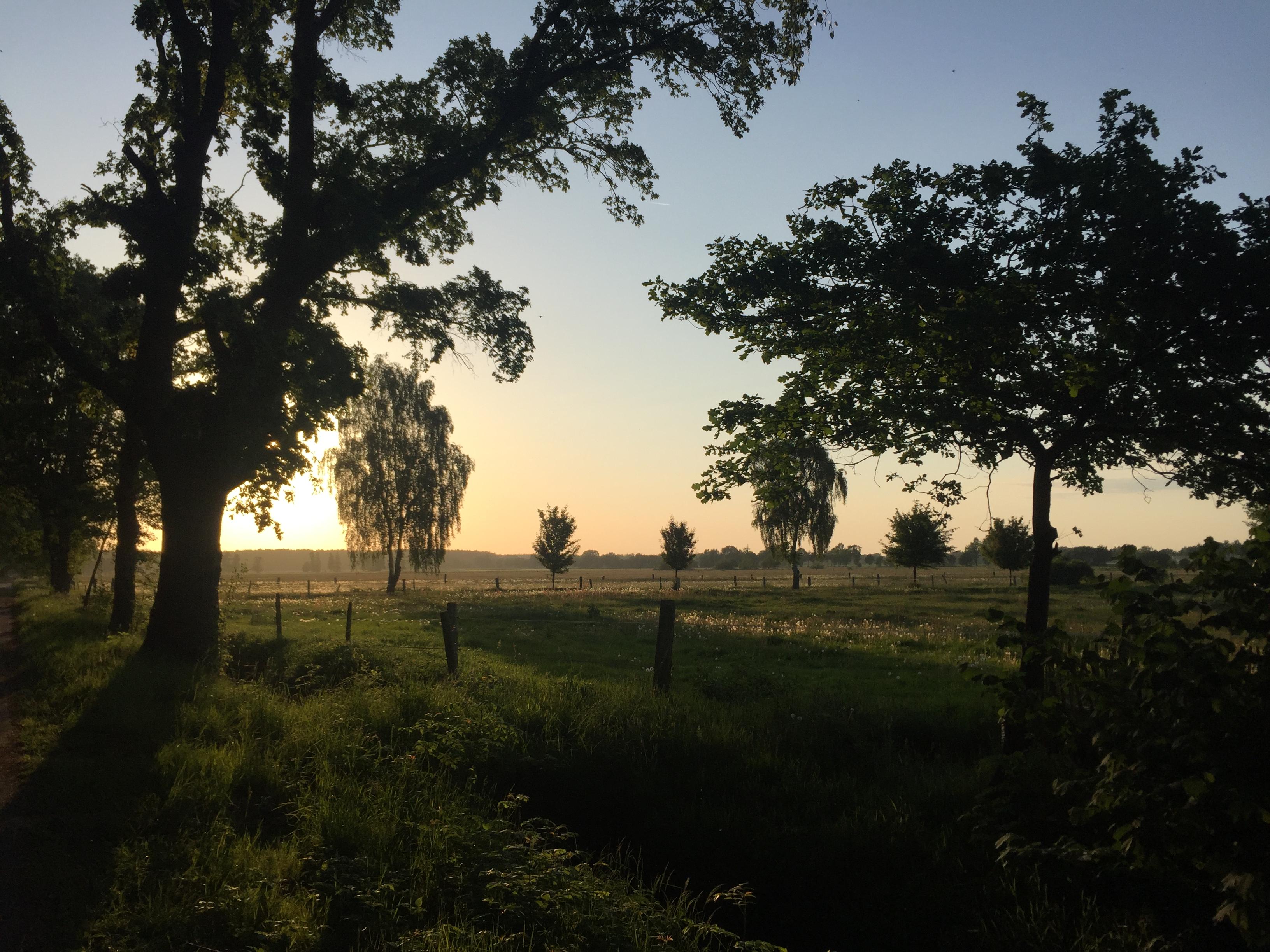 Pusteblume, Landleben, Wiese